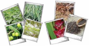 Royal Green výživové doplňky OrganicTime